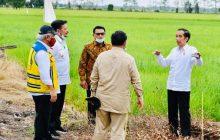 Jokowi Tinjau Reklamasi Rawa Pulang Pisau