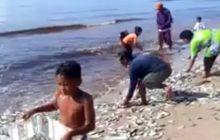 Ikan 'Menepi', Nelayan Kalab tak Melaut