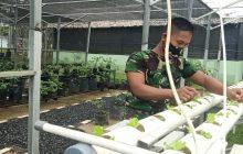 Kodim Rantau Budidayakan Tanaman Sayur dengan Hidroponik