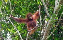 Peringati Hari Hutan Internasional, FAOAjak Restorasi