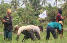 MPPI dan ACT Kalsel Tanam Raya di Anjir Serapat