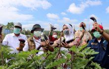 PKK Banjar Dorong Agrowisata Desa Berkembang